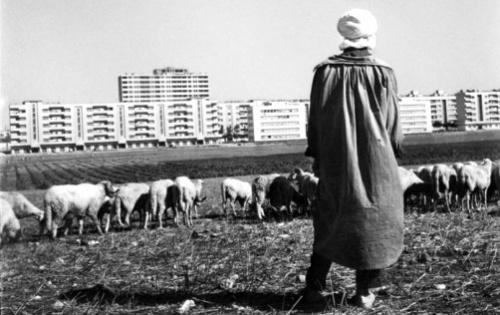Septembre 1960, un berger fait face au nouvel habitat de la banlieue d'Oran, construit dans le cadre du plan de Constantine