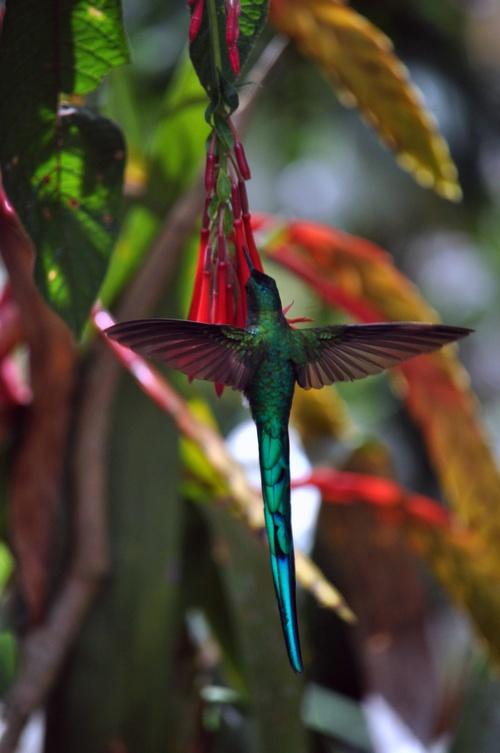 Belles photos Pérou