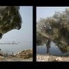 Pakistan- invasion d'araignées sur les arbres !