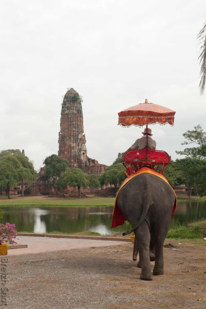 elephants - ayutthaya