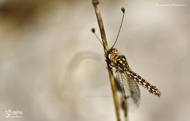 Insectes variés 3 - 2014