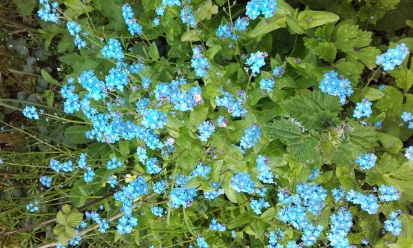 mai en fleurs