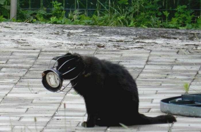 La tête coincée dans une grille, le chat Pixar a été sauvé