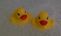 Les canards de bain