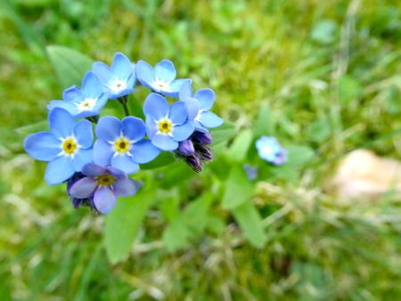 Encore plus de fleurs avec ce temps.