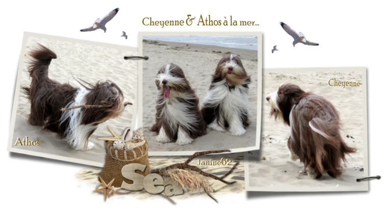 ♥ Athos & Cheyenne à la mer  ♥