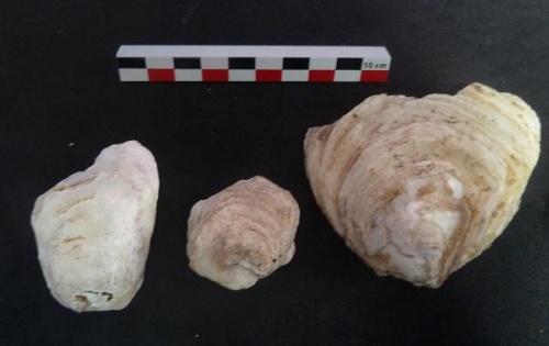 Assiette d'huîtres gallo-romaines