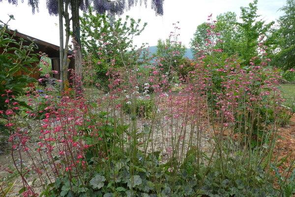 Avril dans mon jardin