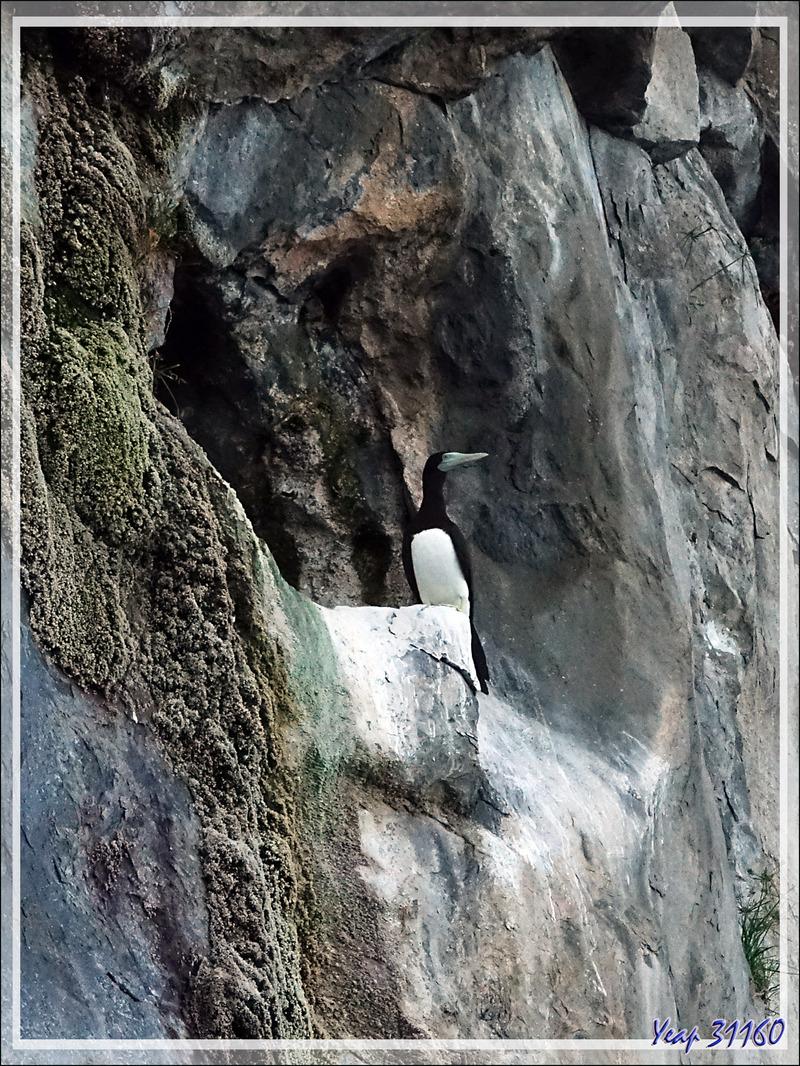 La falaise aux Fous - Nosy Tsarabanjina - Archipel Mitsio - Madagascar
