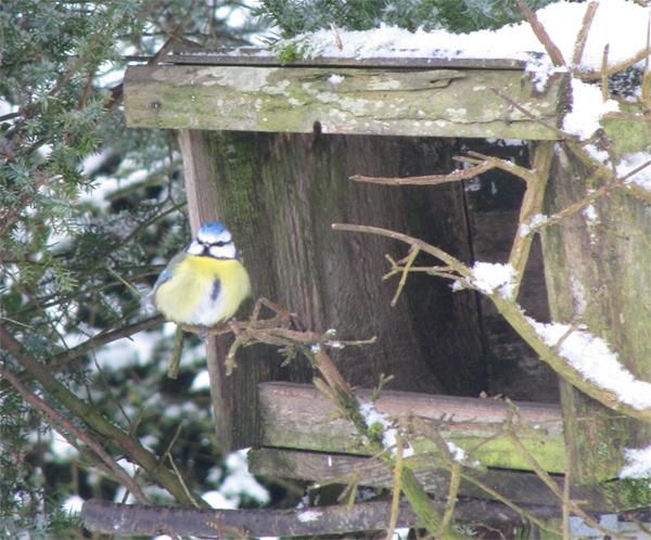 Les oiseaux friands des graines que l'on peut leur donner en hiver