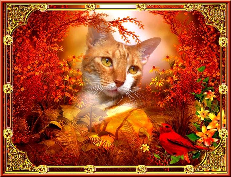 chats d'automne