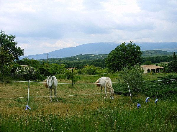 Le sud de France Mai 2011 024