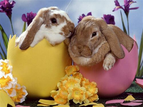 Joyeuses pâques mes petits lapins!!!
