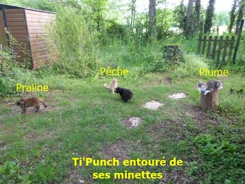 Moi Ti'Punch et Praline