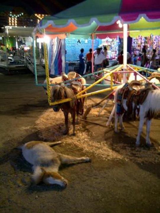 Pétition pour l'interdiction des manèges à poneys