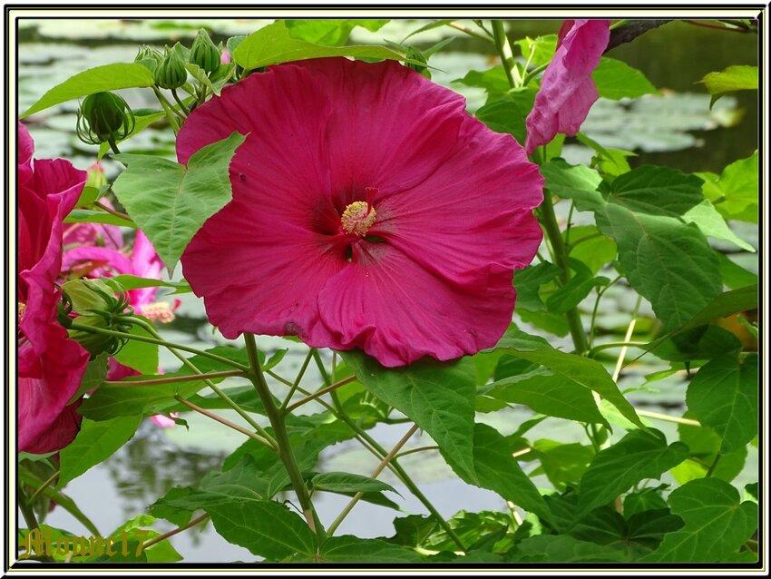 La parc floral de la court d'Aron (Vendée)