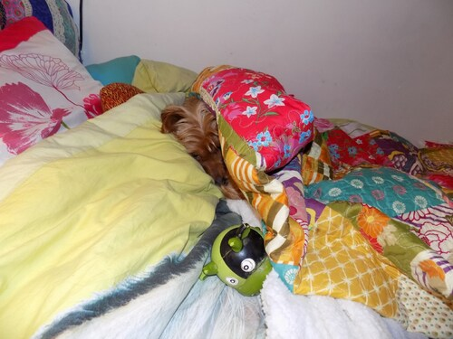 Woopy reste au lit!