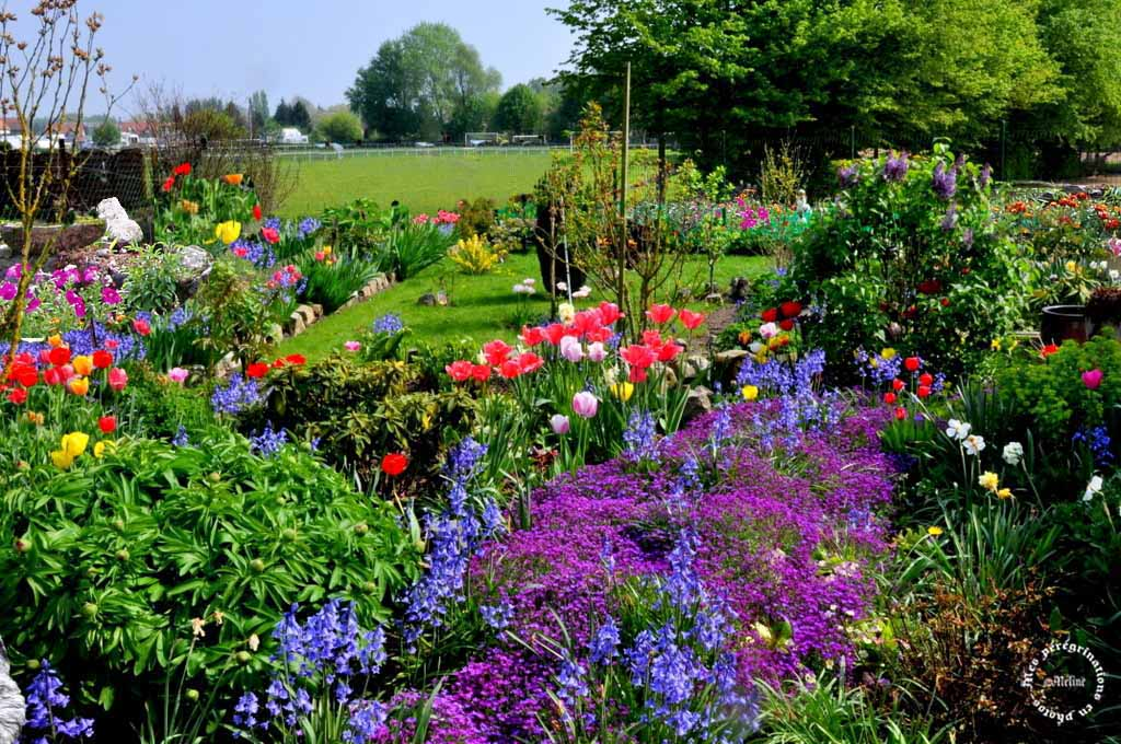 Mon jardin (3)