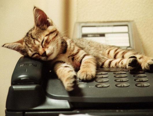 chat secrétaire