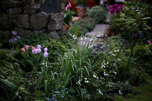Le jardin comme exutoire (5)