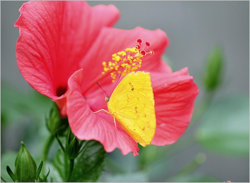 Le Jardin des Papillons - Hunawirh