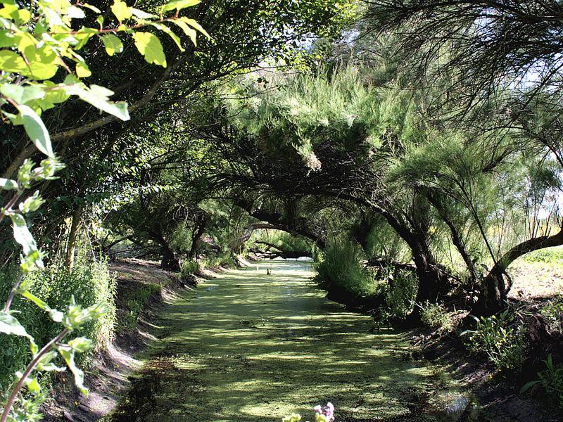 Petit canal aux lentilles (d'eau) - La Couarde - Ile de Ré - 17 posté levendredi 26 septembre 2008
