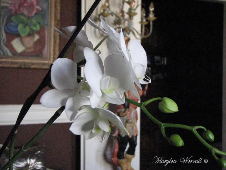 Orchidée blanche et carte postale