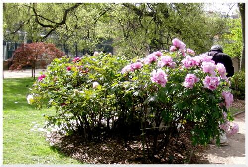 Jardin Brogniard à Paris