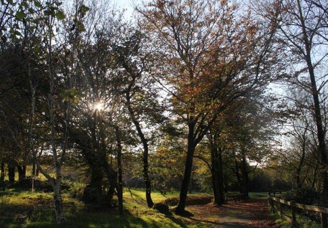 jardin à St Urbain 040