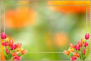 kit printemps 5