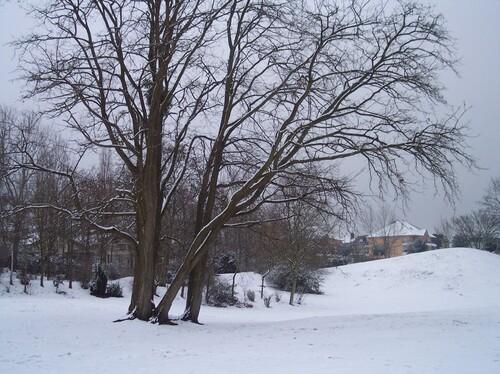 Défi n° 292 : 15 janvier 2021 : la nature en hiver