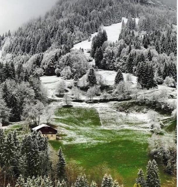 Un drôle de printemps .... en vert et blanc