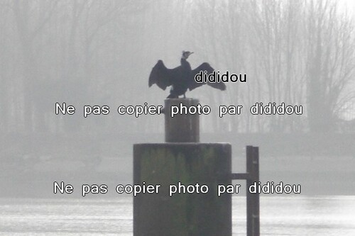 photo pro par dididou
