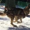 J'Nawak Dolina Volka en action