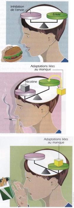 Une seule cigarette peut vous rendre accro à la nicotine !!