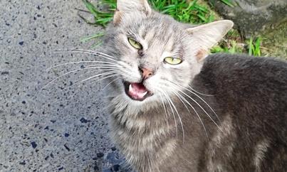 Chatssssssssss, Les chats, devinette.