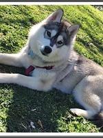 Nala (7 mois)