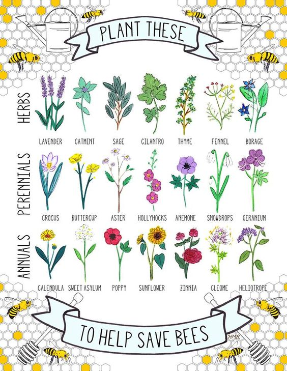 Plant these to save bees: