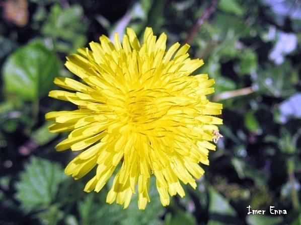 Fleurs-3127.JPG