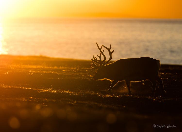 Ambiance coucher de soleil
