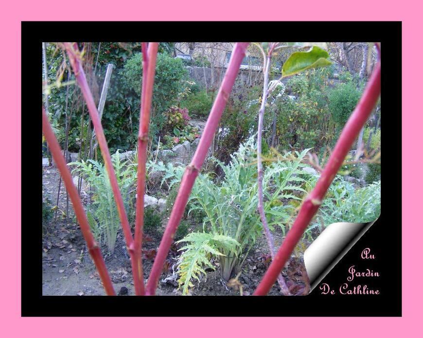 Jardiner avec la lune du 21 au 30 Novembre