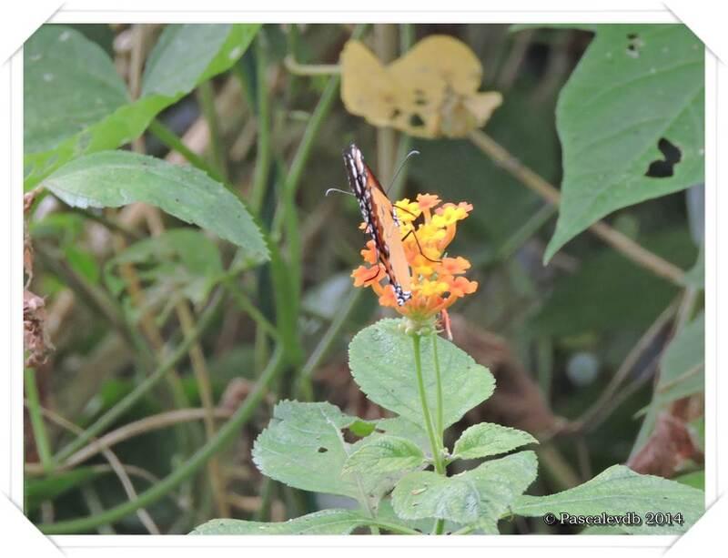 Au Paradis du Papillon à Sanguinet - 2/10