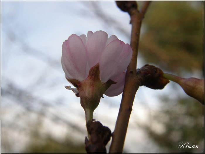 fleurs d'hiver