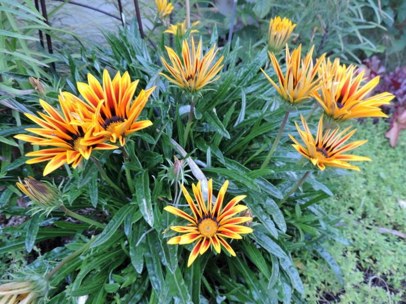 Fleurs D Ete Le Nouveau Blog De Shuki