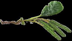 Nature, feuilles, fleurs, arbres (Automne)