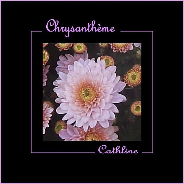 C-comme-Chrysantheme.jpg