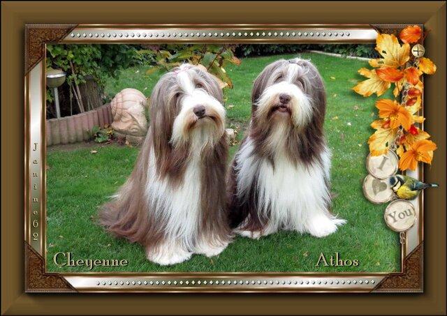 ♥Belle semaine d' Athos & Cheyenne♥
