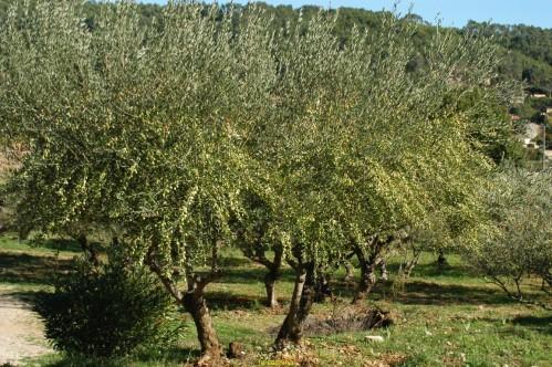 olivier très chargè 05112012