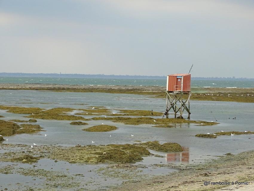 Balade à la Prée, Plaine sur mer