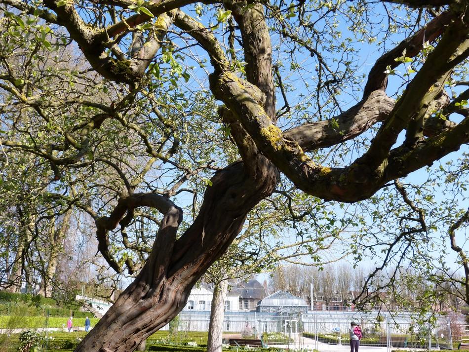 Ces arbres qui m'impressionnent ...